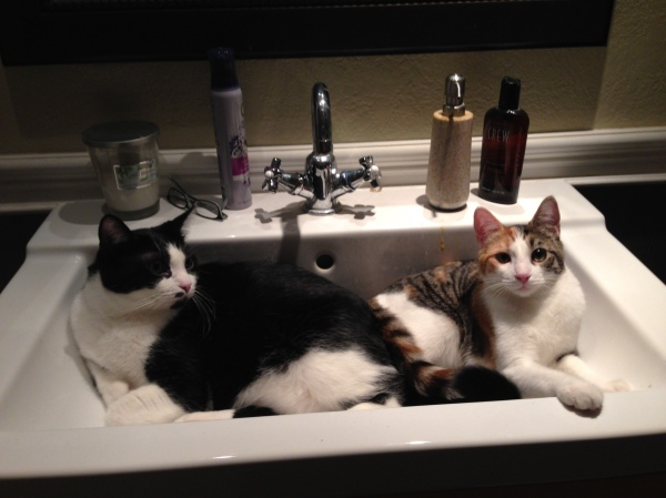 And finally, their favorite place to settle on hot days: the cool porcelain sink.