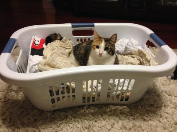Clean laundry, not so clean anymore.