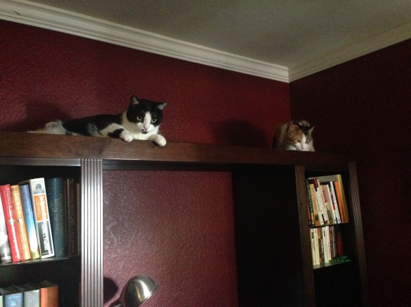 They like to see the world from as high as possible.