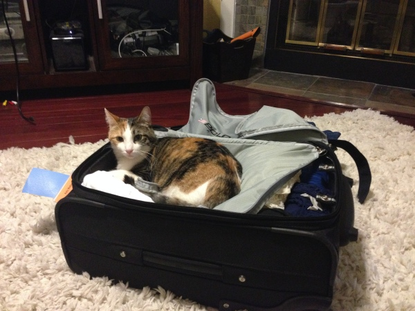 Nora doesn't like it when I pack to go on a trip.