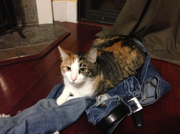 Nora making a nest in T's jeans.